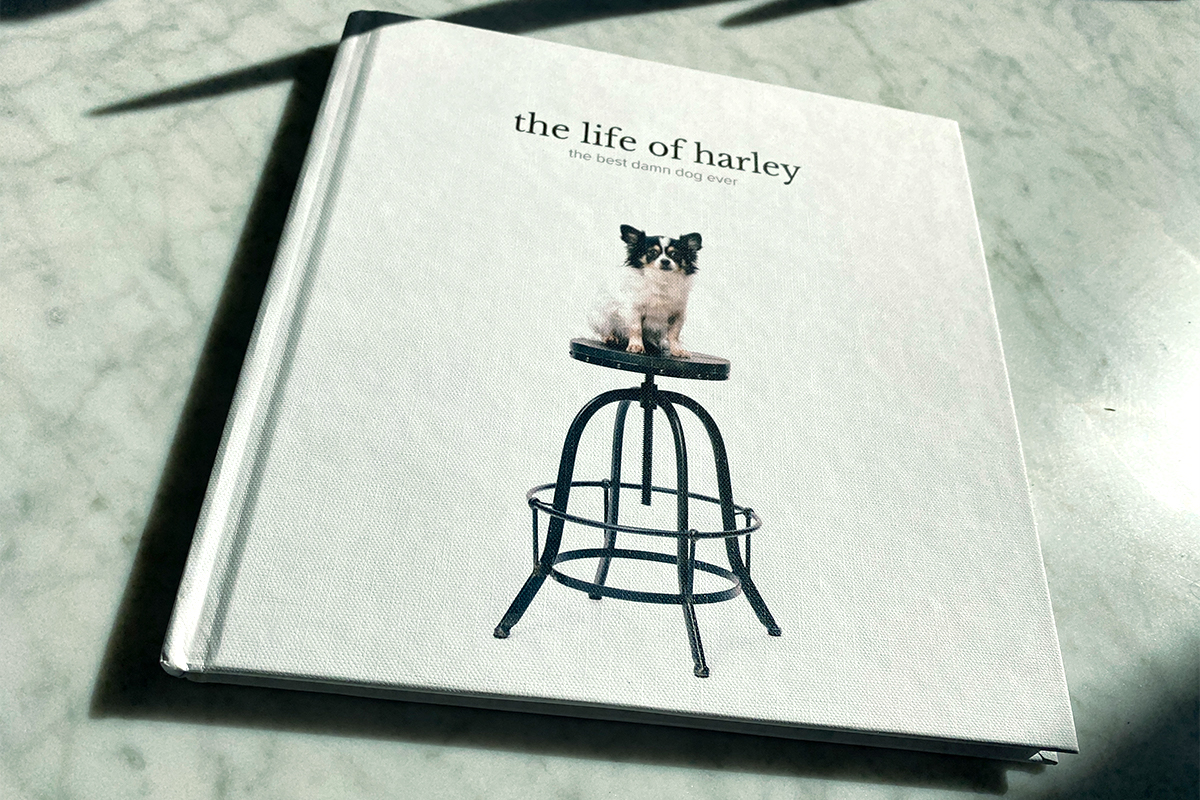 Artifact Uprising Photo Book titled The Life of Harley featuring small dog sitting on a barstool