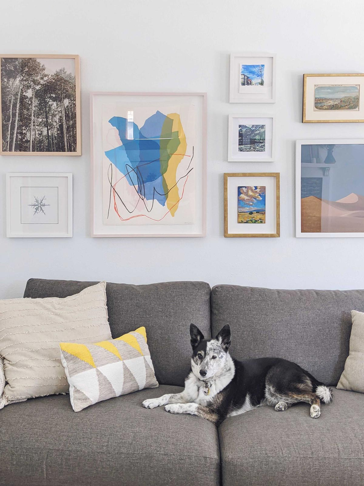 Gallery wall created with Artifact Uprising Gallery frames of different sizes above a grey couch with a blue heeler laying on it