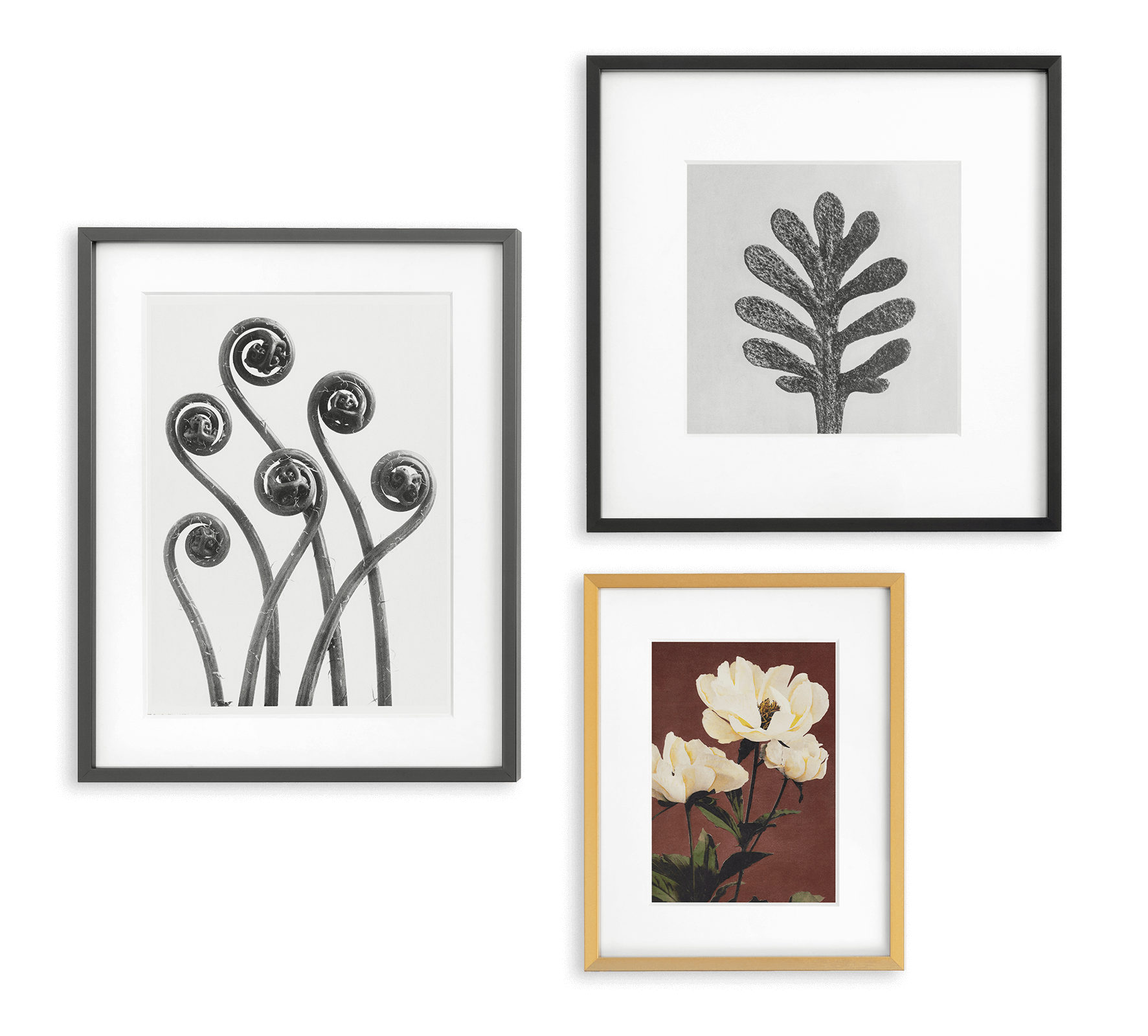 3 frames (2 black, 1 brass) with closeups of vintage botanicals like leafs and pansies