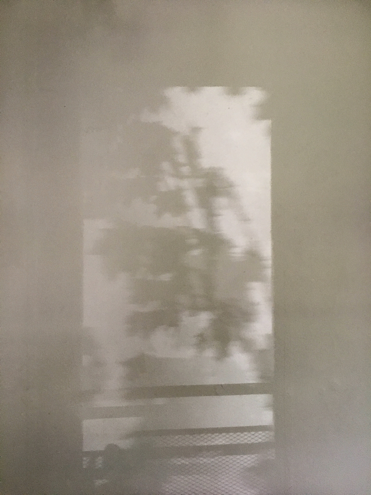 Shadow silhouette of tree leaves cast on the wall by light from the window